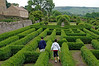 Two boys negotiating the boxwood maze in the formal garden at Castle Bolton - England