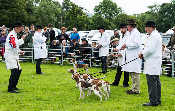 Dog show near Ambleside