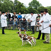 Dog show near Ambleside