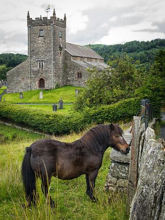 Pony in Hawkshead