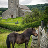Pony in Hawkshead