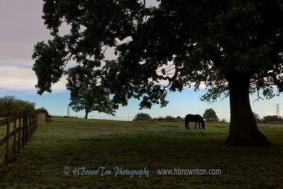 Near Colham, UK