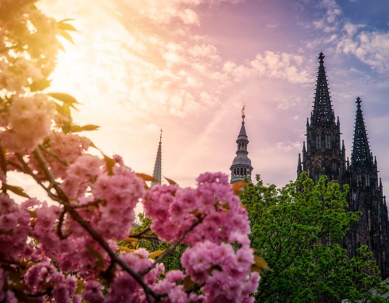 St. Vitus & blooms