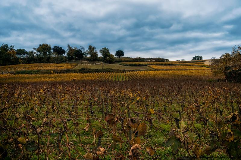 vinyards of St. Emilion