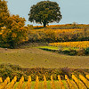 vinyards of St. Emilion