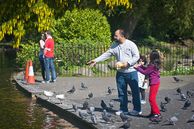 Young love, young families and hungry pigeons, all to be found at St. Stephen's Green in Dublin!