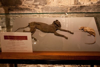 "The actual cat and rat that James Joyce mentions in ""Finnegan's Wake"" which were trapped in the organ upstairs."
