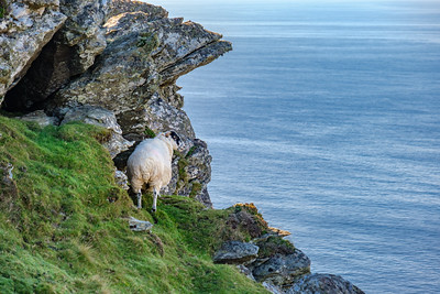 Precarious feeding ground at Slieve League.