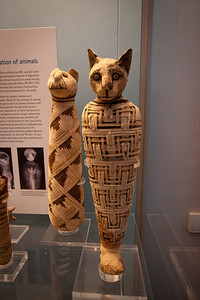 Mummified cat, Egyptian exhibit British Museum