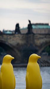 Yellow Penguins, Sovových mlýnů, Praha