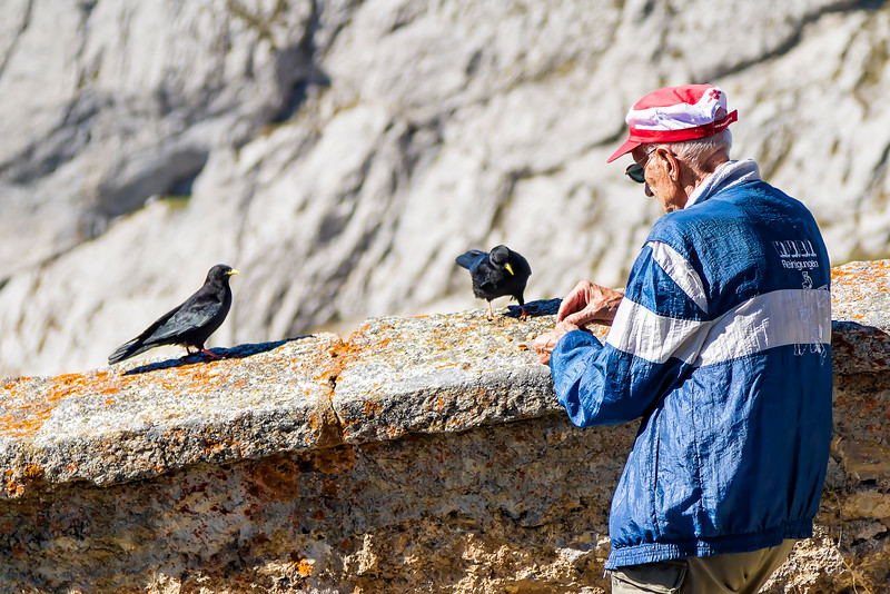 crows scavaged successfully from many tourists
