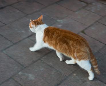 cat rushing it