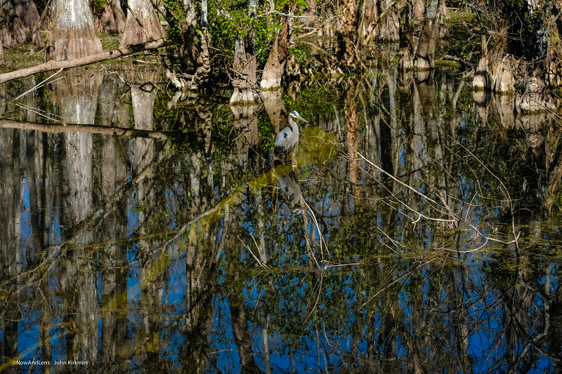 Everglades refection