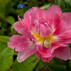 Monet's Garden, Snail in a flower