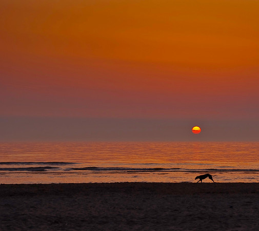 Greyhound at Sunset, Thalassa Beach, Holland
