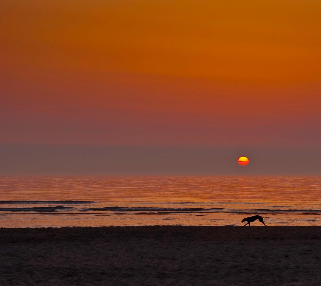 Greyhound at Sunset, Thalassa Beach, Holland