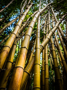 Bamboo (C) Bill Hiskett