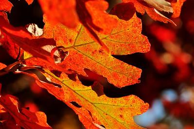 Fall-In-Iowa