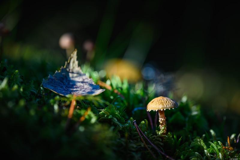 Leaf and mushroom