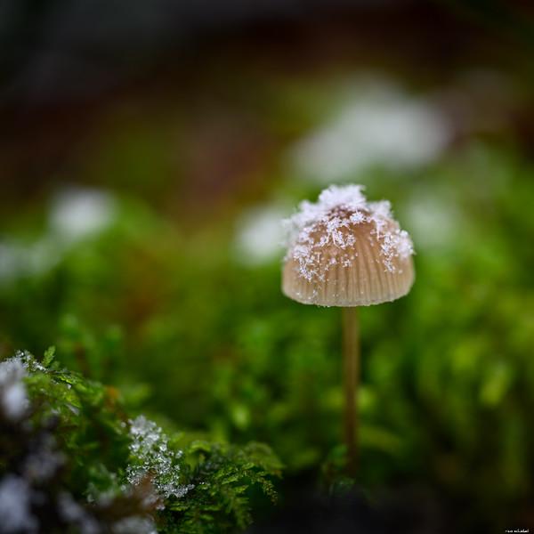 Snowy cap
