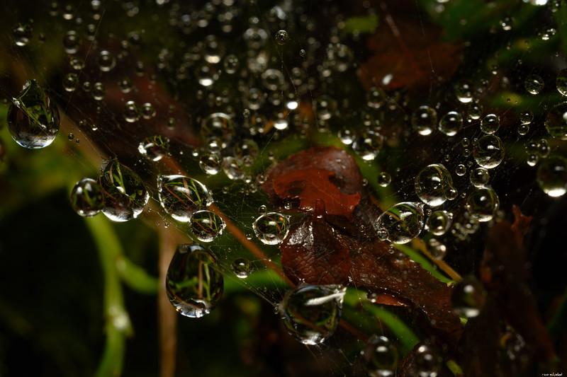 Net of drops