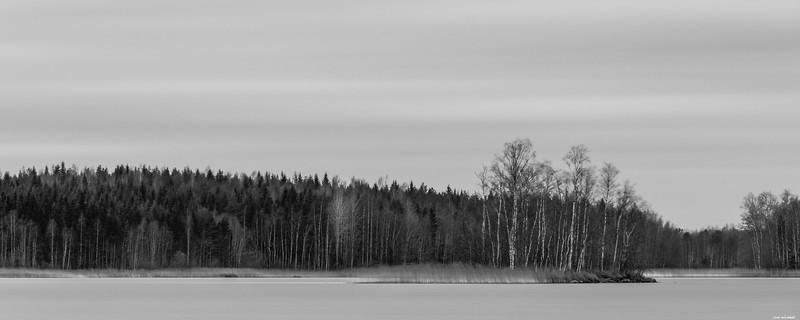 Calm woods