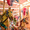 011317_Wild Carousel Horses on the Carousel Antica Giostra Toscana