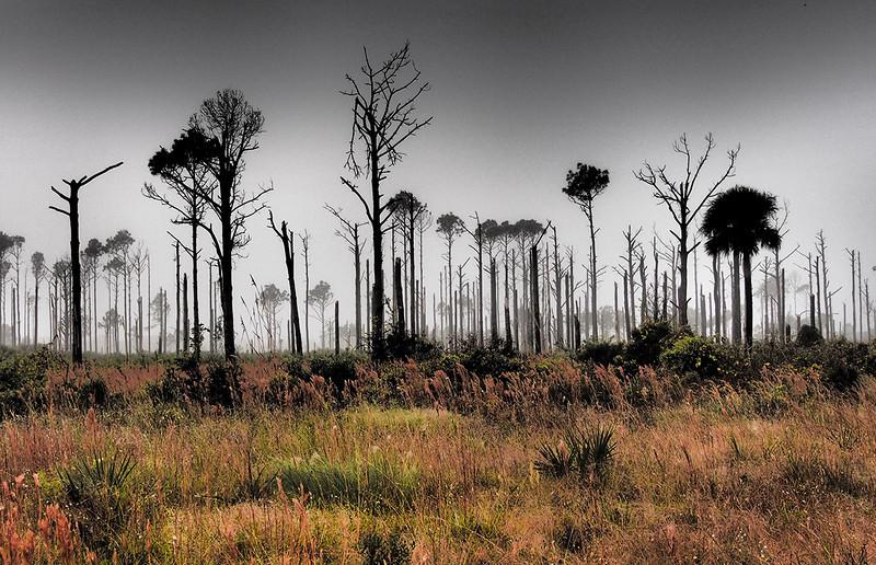 foggy Florida morning<br /> Max Brewer Memorial Pkwy<br /> Merritt Island NWR, Florida<br /> December 2012