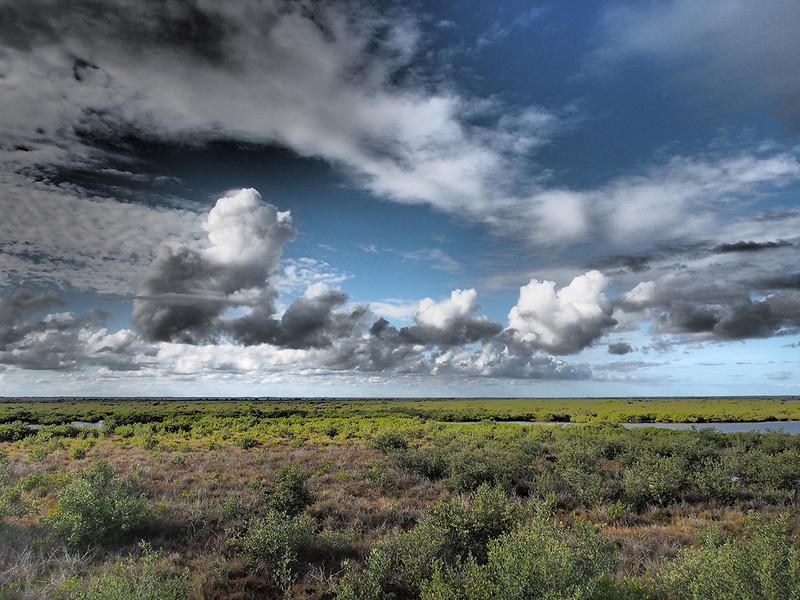 view of the marsh<br /> Black Point Wildlife Drive<br /> Merritt Island NWR, Florida<br /> December 2012