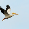 American White Pelican<br /> Wood Stork<br /> Black Point Wildlife Drive<br /> Merritt Island NWR, Florida<br /> December 2012