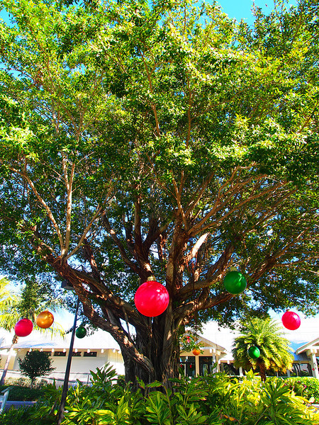 """Christmas Tree""<br /> Captiva Island, Florida<br /> December 2012"