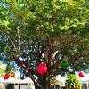 """Christmas Tree""<br /> Captiva Island, Florida<br /> December 2012"