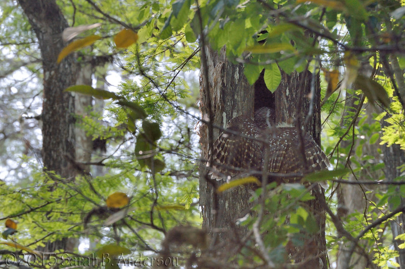 Food transfer at the nest cavity
