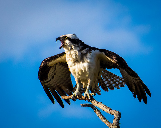 Osprey lets us know he's ready for a fight