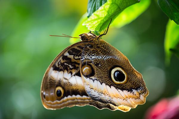 Florida Keys Butterfly