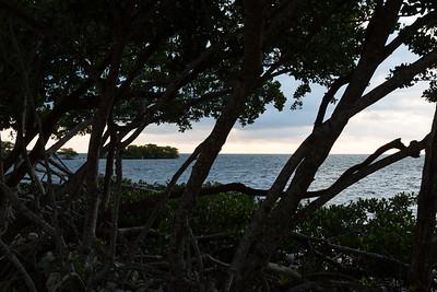 Through the Mangroves