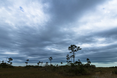 Overcast Skies -- -- Everglades National Park