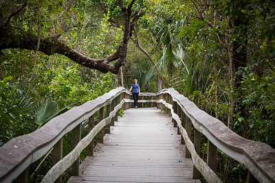 Mahogany Hammock Walkway -- Florida Everglades National Park
