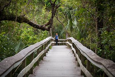 Mahogany Hammock Walkway -- Florida Everglades National Park