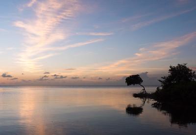 grassy key mangrove after sunset