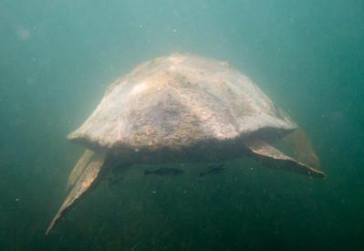 snorkeling at coral bay-9.jpg