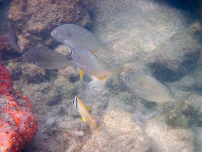 snorkeling at coral bay-2.jpg