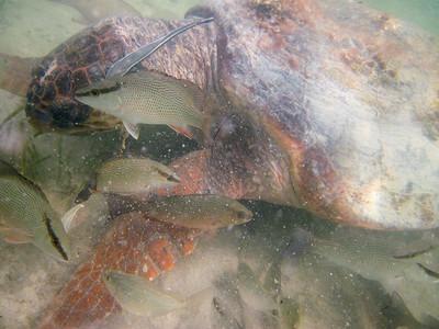 snorkeling at coral bay-5.jpg