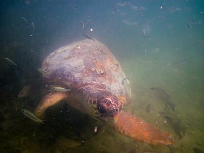 snorkeling at coral bay-7.jpg
