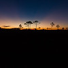 Twilight in Big Cypress swamp