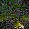 Mahogany Hammock - Everglades National Park