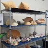 Scenes from the annual Sanibel Sea Shell Festival, March 2015.<br />http://fineshellart.blogspot.com/2015/01/78th-annual-sanibel-shell-festival.html<br />Lends new meaning to the old phrase,