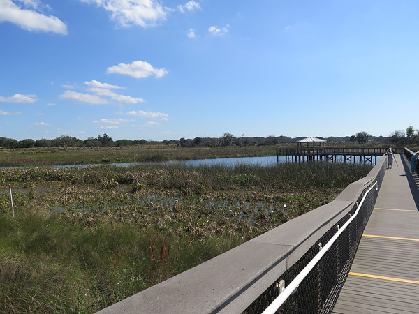 The Celery Fields, Sarasota, Florida. The observation walkway and deck. There are also many paths along the dikes around the ponds.
