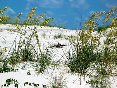 Dunes - Florida