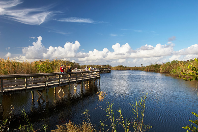 Marsh Board Walk
